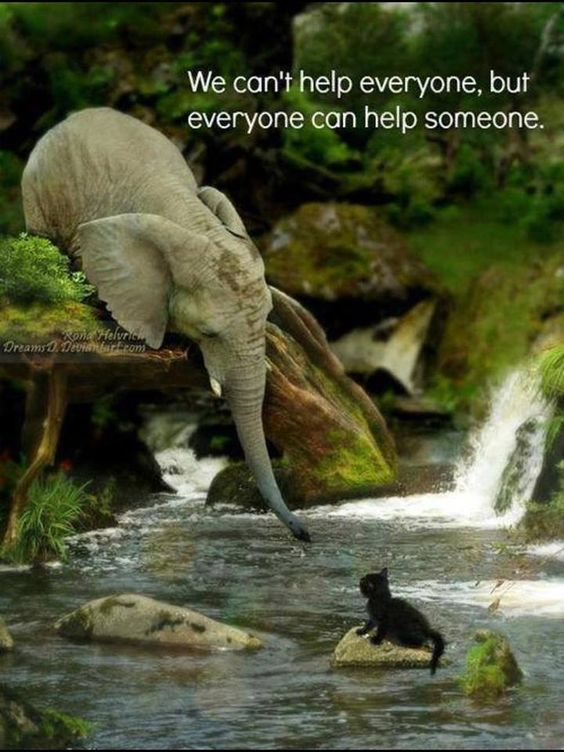 No one can help everyone, but everyone can help someone.