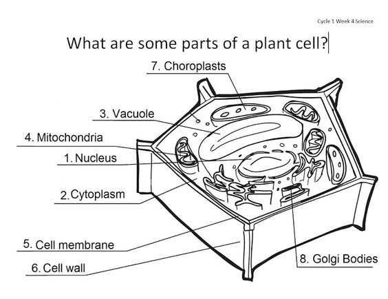 Label Cell Parts Worksheet Free Worksheets Library – Label Plant and Animal Cell Worksheet