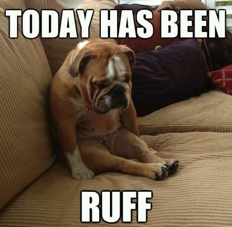 Image result for dog having a bad day