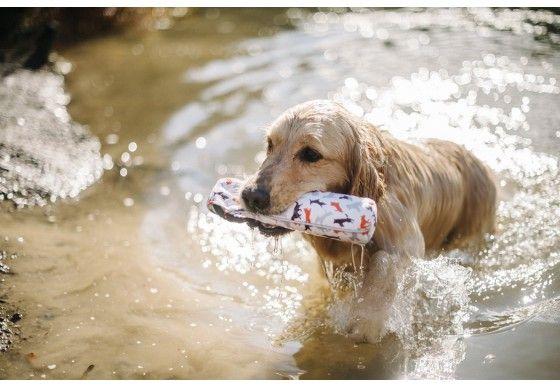 Toss Float Toy Dog Milk Dog Toys Outdoor Dog Toys