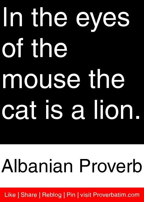In the eyes of the mouse the cat is a lion. - Albanian Proverb #proverbs #quotes: