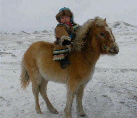 This little Mongolian kid is as well dressed against the cold as the horse is. No wonder considering Mongolia's geography.