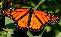 #Native #Plant #Database --  #Lady #Bird #Johnson #Wildflower #Center, Austin, Texas