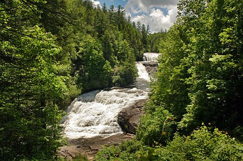 Dupont Forest NC