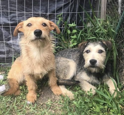 Adopt Merrie And Chrissy On Petfinder Rescue Dogs Dog Rocks