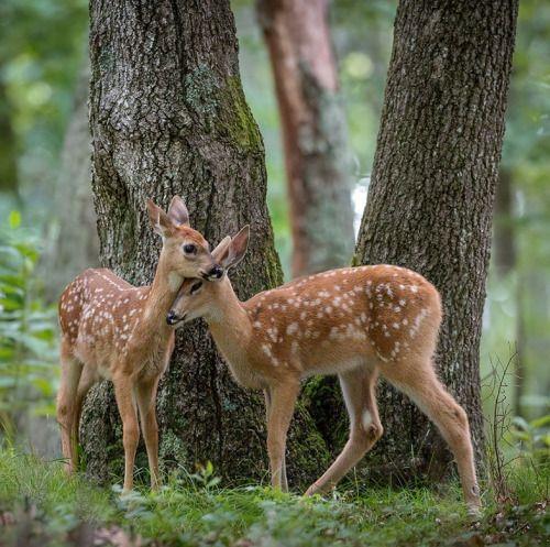 TogetherbyNick Kalathas - Nature's Moments