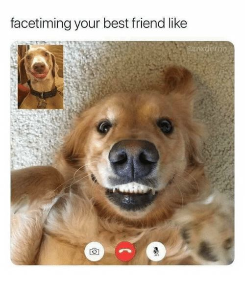 40 Amusing Memes And Comics That Are Too Good To Pass Up Funny Friend Memes Funny Animal Memes Animal Memes