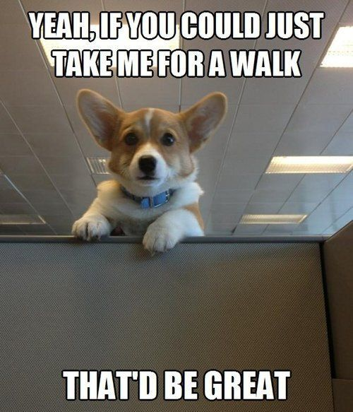 Humor Train - Funny Pictures, Corgi visit roflburger.com the funny pinterest, where you can create your own memes and post your own images