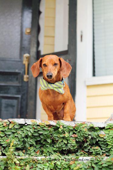 Road Trip with Ammo - Dog Friendly Downtown Charleston, South Carolina