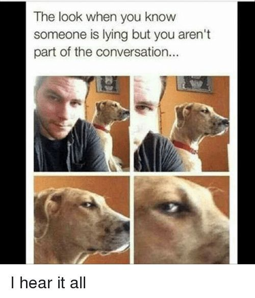 11 Hilarious When You Memes To Cheer You Up Funny Animal Memes Funny Pictures Cute Funny Animals