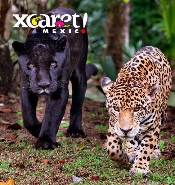 Jaguar Island A Wild Adventure In Xcaret Park Cancun Xcaret Wild Adventures Adventure
