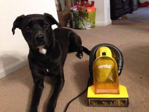 Top 15 Best Vacuum For Dog Hair Reviews In 2020 Pet Hair Vacuum Best Pet Hair Vacuum Vacuums