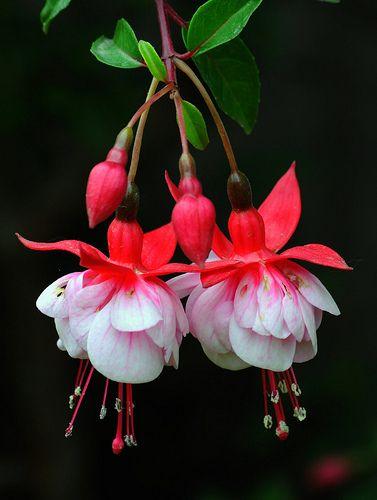 bellezas gemelas | aljaba | Edith Polverini | Flickr