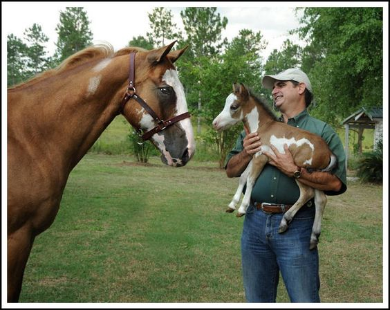 Sweet -Therapy Horses of Gentle Carousel