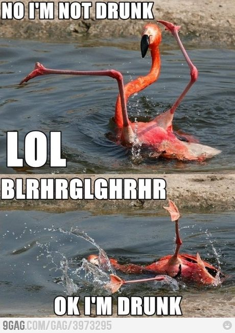 Im not Dru-BRGHLHLGRRH: In Drunk, Flamingo You Re, Funny Picture, Funny Stuff, Silly Flamingo, Funny Animal, Drunk Flamingo, So Funny