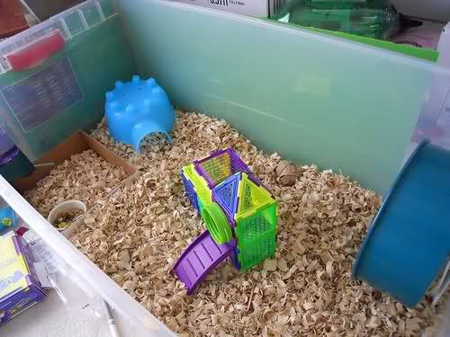 Aha instead of a cage use a bin much more comfy less for Diy hamster bin cage