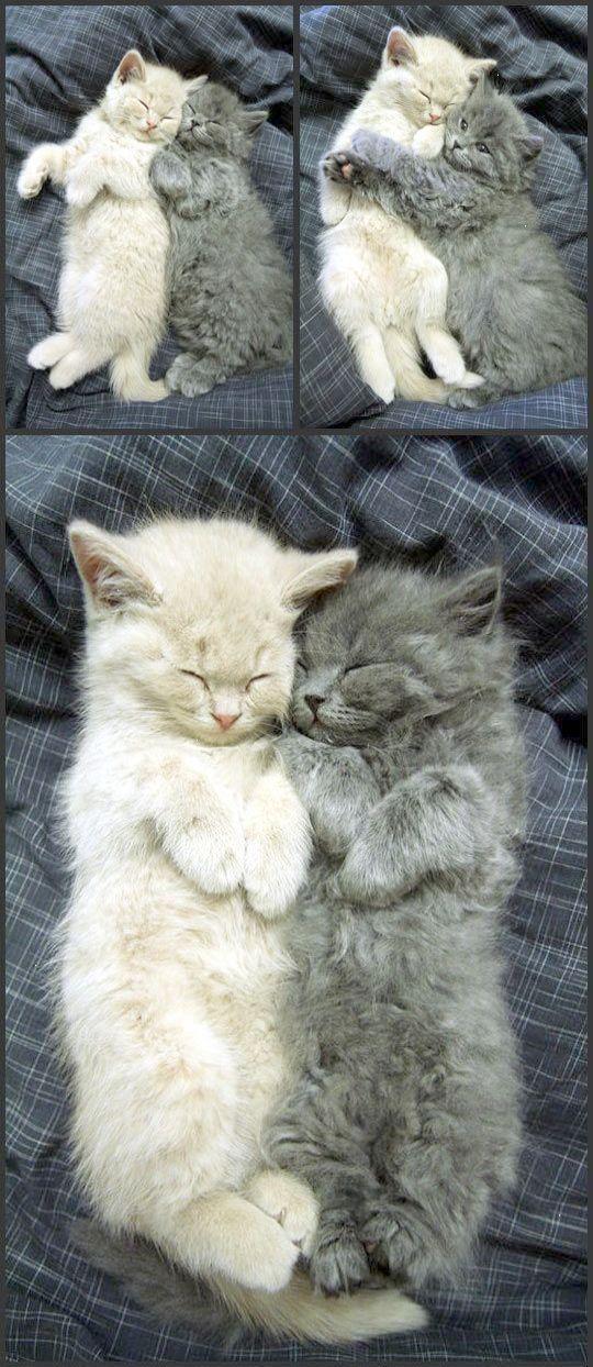 Echte Miezenliebe Wow Kittens Cutest Cats And Kittens Cute