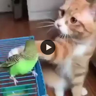 Mas que gato esperto, acalmou sua presa antes de dar o bote
