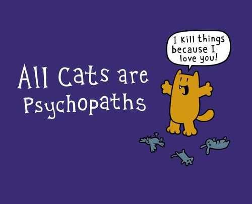 Todos gatos são psicopatas kkkkkkk