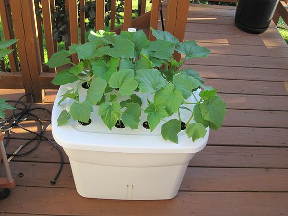 Step by step diy guides for sub irrigated self watering - Self watering 5 gallon bucket garden ...