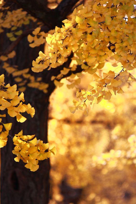 """""""... certe giornate limpide di sole e pulite dal vento ... Sono questi i giorni più belli per camminare le montagne alte dell' Altopiano ... i larici incominciano a prendere il colore dell' oro vecchio ..."""" dal libro """"Stagioni"""" di Mario Rigoni Stern"""