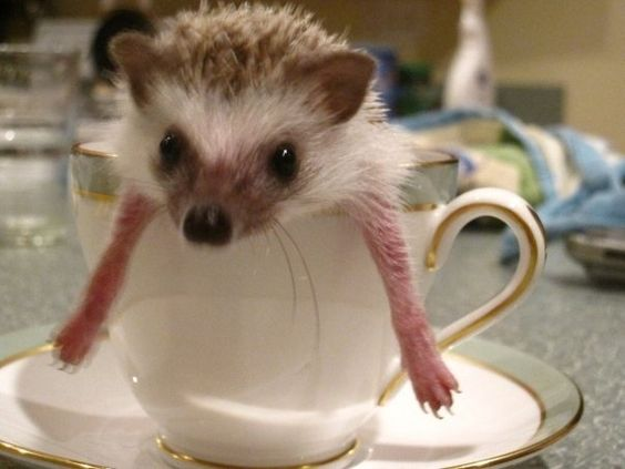 A Cup of Hedgehog! LOVE!