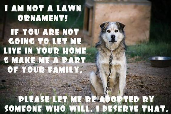 No animal should be chained and left outside!