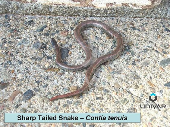 how to tell venomous snakes from non