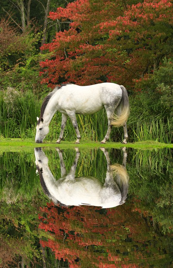 Horse reflection - title White Ripples - by Kevin Forrister: