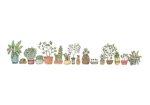 transparent cactus tumblr google search so so cute pinterest zeichnungen kaktus und tumblr. Black Bedroom Furniture Sets. Home Design Ideas