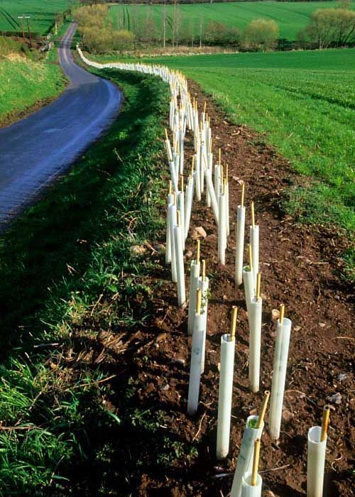 Ultimate Guide How To Plant Trees On Your Farm In 2020 Trees To