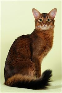 sublim somali cat