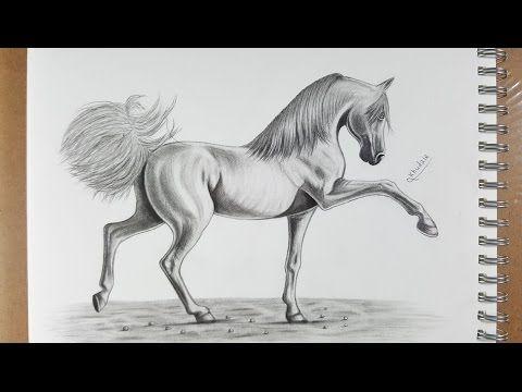 كيفية رسم حصان بالقلم الرصاص How To Draw Horse In Pencil Youtube Animal Paintings Horse Drawings Animal Drawings