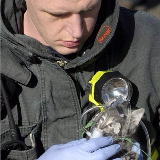 A firefighter giving oxygen to a kitten