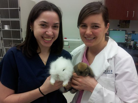 These baby bunnies can make anyone smile! Lambie (white), a Jersey Wooley, and Ginger (brown) a Holland Lop, were here visiting with our Avian & Exotics department for their routine baby wellness exams. Dr. Rivera and our visiting veterinary student Natalie couldn't put these two cuties down!