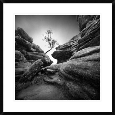 """Global Gallery 'Struggle' by Sainty Framed Photographic Print Size: 28"""" H x 28"""" W x 1.5"""" D"""