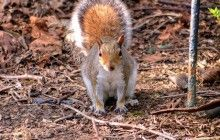 See squirrels and birds on a wildlife walks this October http://bit.ly/2dKdYVH