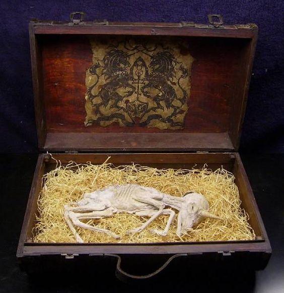 1. mummified unicorn (2) | Always be a Unicorn | Pinterest ...