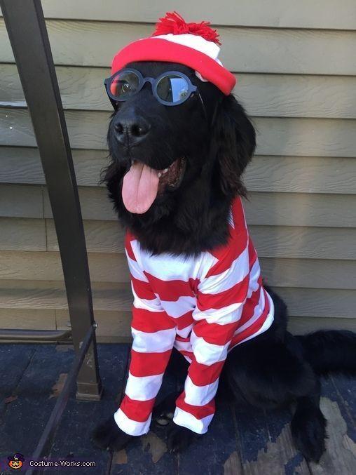 Where S Waldo Halloween Costume Contest At Costume Works Com