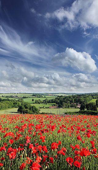 Poppy field, Chartham Downs, Kent, UK.