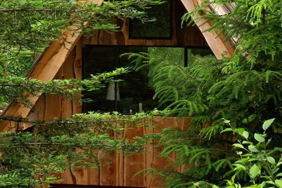 A Lovely Forest Home Built With A $11,000 Budget