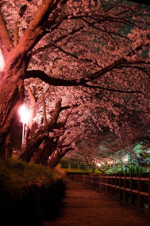 Yozakura The Night Sakura In Japan Kyuhoshi Beautiful Photos Of Nature Scenery Wallpaper Aesthetic Japan