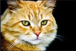Bio Bloggando: Comportamento del gatto dominante