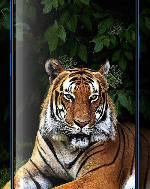 25 Gambar Harimau Wallpaper Keren 3d 80 Gambar Harimau 3d Paling Bagus Gambar Pixabay Green Screen Tiger Full Hd Download Link G Di 2020 Hewan Binatang Buas Gambar