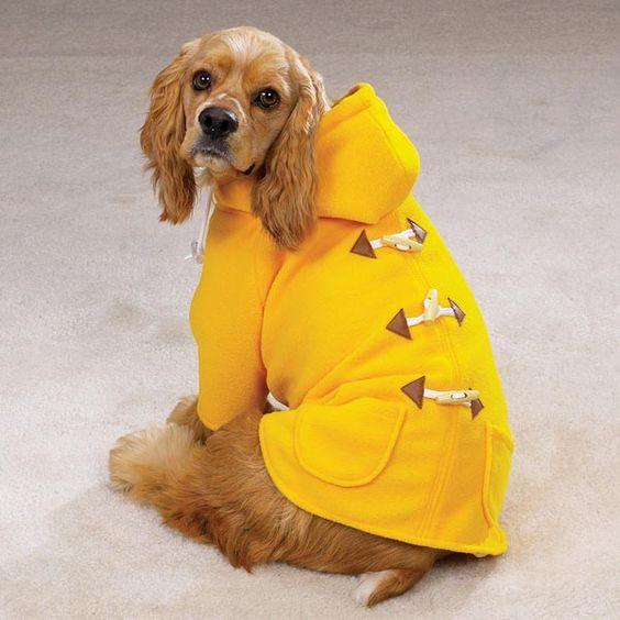 Goldenrod Dog Duffle Coat for Janet @Rose Pendleton Kemmy? | 과젱