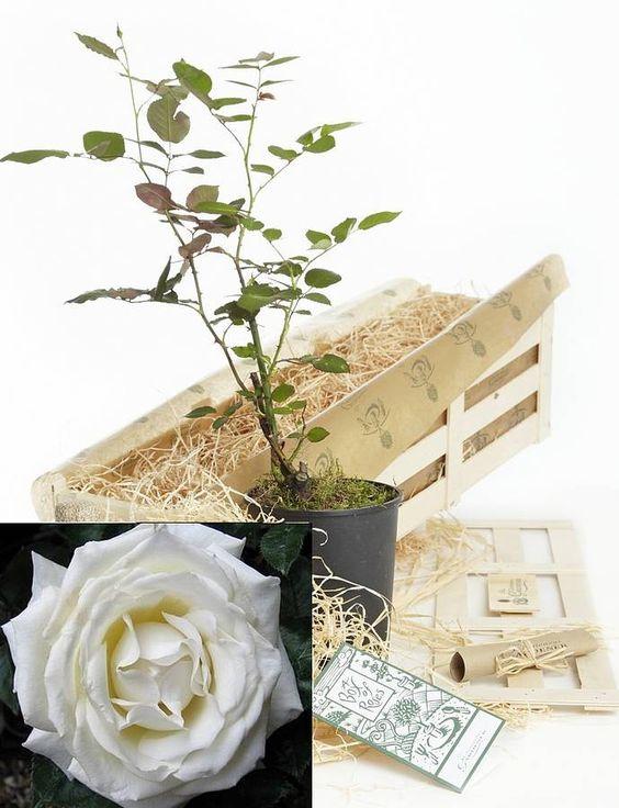 silver wedding anniversary gift by the gluttonous gardener | notonthehighstreet.com