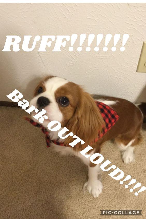 RUFF!!!!!!!!!!!!!