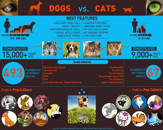 Dogs and Cats Infographics poster, just posted it here to show you ...
