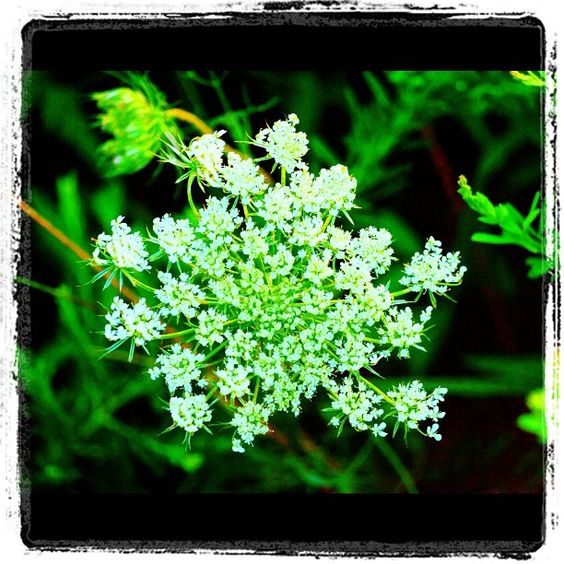 Beautiful flower. Photos July 14, 2012 at 11:06PM