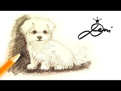Wie Zeichnet Man Einen Hund Malteser Mit Bleistift How To Scribble A Dog Risunka S Moliv Na Kuche Youtube Malteser Hund Hund Zeichnen Hund Malen